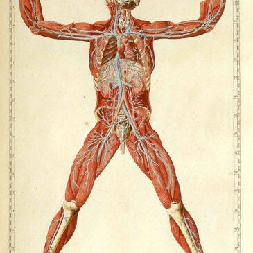 Dream Anatomy